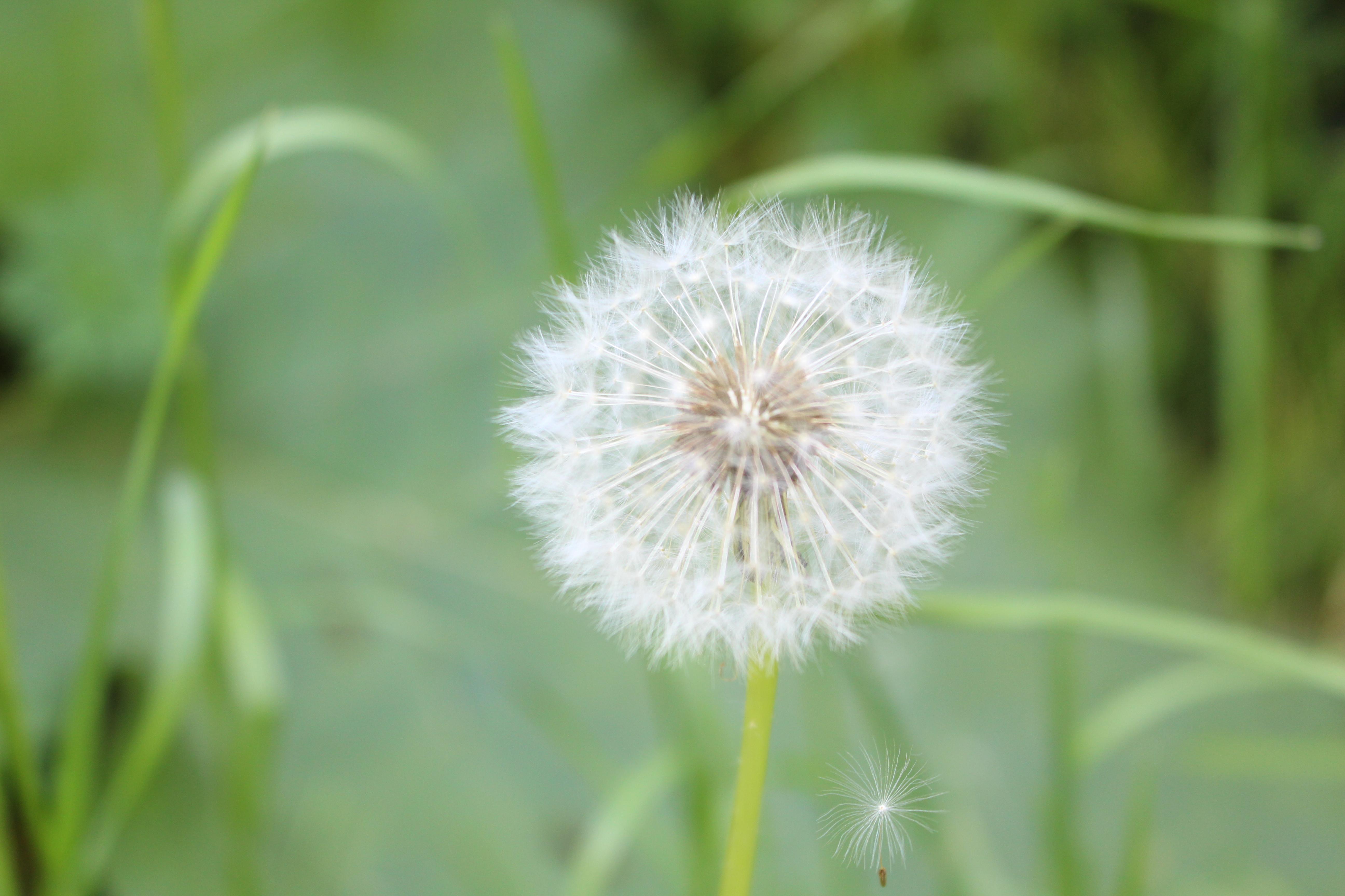Allergie saisonnière : qu'est-ce que c'est ?